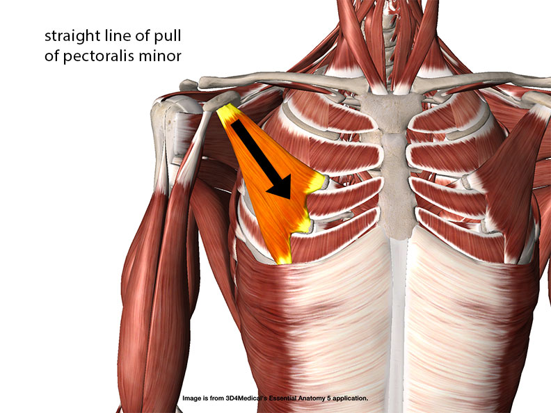 straight line of pull of pectoralis minor