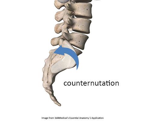 counternutation