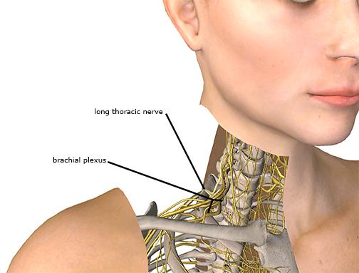 Long Thoracic Nerve  pression