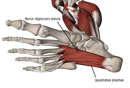 Pain foot of nerve bottom