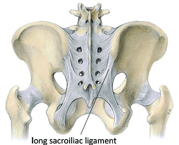 long sacroiliac ligament