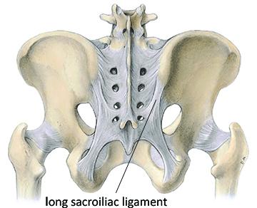 long sacroiliac ligament