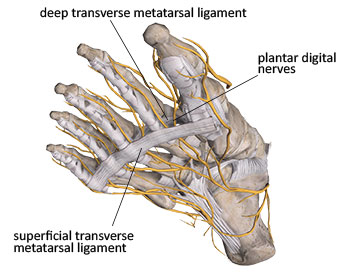 digital plantar nerves