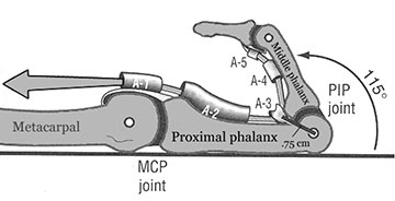 Flexor pulleys