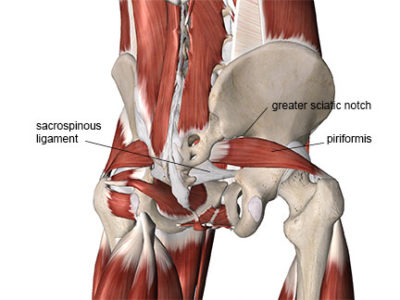 Piriformis in relation to other nearby structures