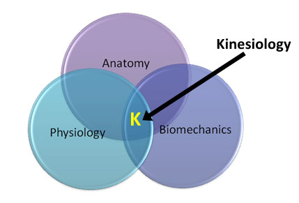 Three branches of kinesiology