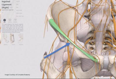 Inguinal ligament