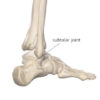 Figure 4 The subtalar joint Image courtesy of Complete Anatomy
